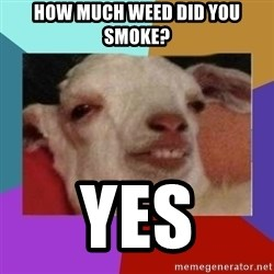 High goat - How much weed did you smoke? Yes