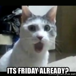 Surprised Cat - its friday already?