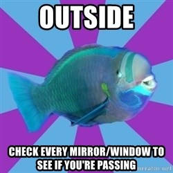 transparrotfish - OUTSIDE CHECK EVERY MIRROR/WINDOW TO SEE IF YOU'RE PASSING