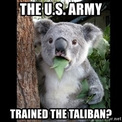Koala can't believe it - the u.s. army trained the taliban?
