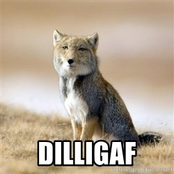 Disappointed Tibetan Fox - DILLIGAF