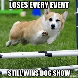 Ridiculously Photogenic Corgi  - Loses every event Still wins Dog Show