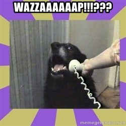 Yes, this is dog! - wazzaaaaaap!!!???