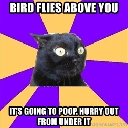 Anxiety Cat - Bird flies above you It's going to poop. Hurry out from under it