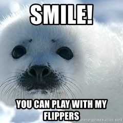 Happy Harp Seal - Smile! You can play with my flippers