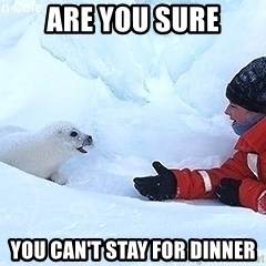 Happy Harp Seal - Are you sure you can't stay for dinner