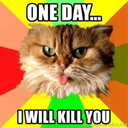 dangerous cat - one day... i will kill you