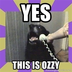 Yes, this is dog! - Yes this is ozzy