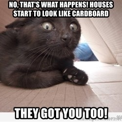 Paranoid cat - NO, THAT'S WHAT HAPPENS! HOUSES START TO LOOK LIKE CARDBOARD THEY GOT YOU TOO!