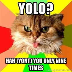 dangerous cat - yolo? Hah (yont) you only nine times