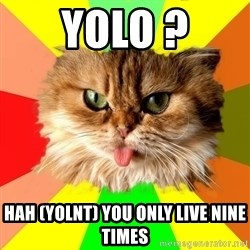 dangerous cat - Yolo ? HAH (YOLNT) YOU ONLY LIVE NINE TIMES