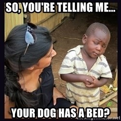 Skeptical third-world kid - So, you're telling me... your dog has a bed?