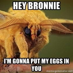 Scary Moth - Hey bronnie I'm gonna put my eggs in you