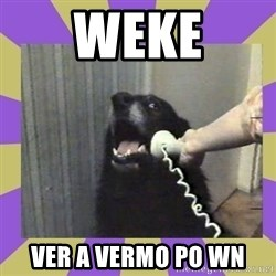 Yes, this is dog! - weke ver a vermo po wn