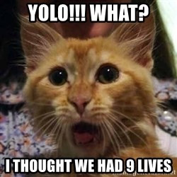 Crazy cat - YOLO!!! WHAT? I THOUGHT WE HAD 9 LIVES