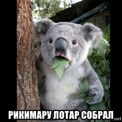 Koala can't believe it - рикимару лотар собрал