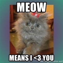 cute cat - MEOW MEANS I <3 YOU