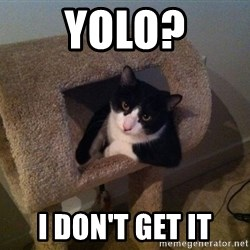 cool cat - Yolo? I don't get it