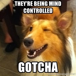 Wink Dog - They're being mind controlled Gotcha