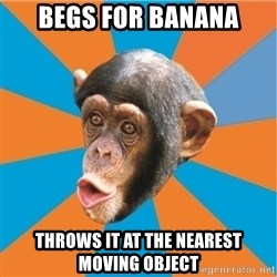 Stupid Monkey - begs for banana throws it at the nearest moving object