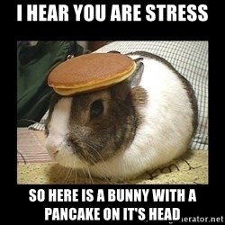 Bunny with Pancake on Head - I hear you are stress So here is a bunny with a pancake on it's head