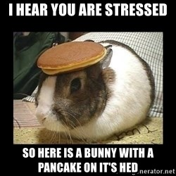 Bunny with Pancake on Head - I hear you are stressed  So here is a bunny with a pancake on it's hed