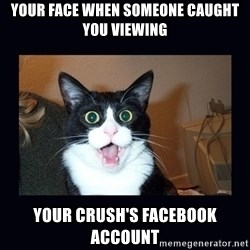 shocked cat - Your face when someone CAUGHT you viewing your crush's facebook account