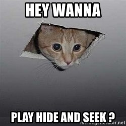 Ceiling cat - hey wanna play hide and seek ?