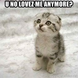 The Favre Kitten - U no lovez me anymore?