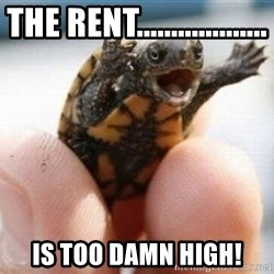 angry turtle - the rent................... is too damn high!