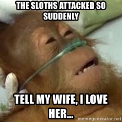 Dying orangutan - the sloths attacked so suddenly tell my wife, i love her...