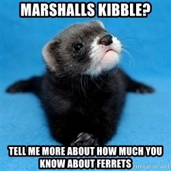 Philosophy Major Ferret - marshalls kibble? tell me more about how much you know about ferrets