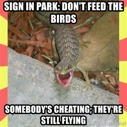 lizard - Sign in park: don't feed the birds Somebody's cheating; they're still flying