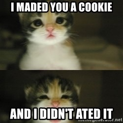 Adorable Kitten - I maded you a cookie and i didn't ated it