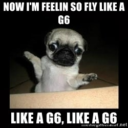 Confused Pug - Now I'm feelin so fly like a G6  LIKE A G6, LIKE A G6