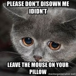 Sadcat - please don't disown me ididn't leave the mouse on your pillow
