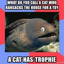 Bad Joke Eels - What do you call a cat who ransacks the house for a toy a cat-has-trophie