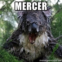 Wet Koala - MERCER