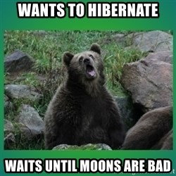 Speedster Bear - WANTS TO HIBERNATE WAITS UNTIL MOONS ARE BAD