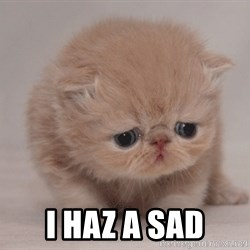 Super Sad Cat - I haz a sad