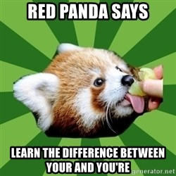 Red Panda - Red Panda Says Learn the difference between your and You're