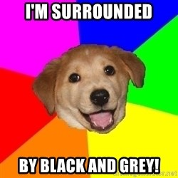 Advice Dog - I'm surrounded by black and grey!