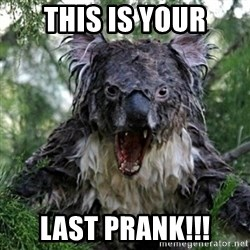 Wet Koala - this is your last prank!!!