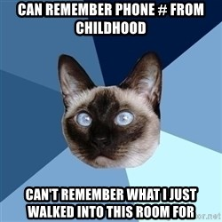 Chronic Illness Cat - Can remember Phone # from Childhood Can't remember what i just walked into this room for