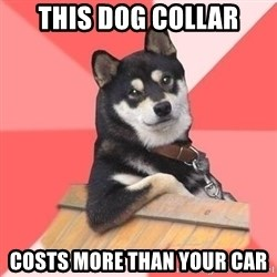 Cool Dog - THIS DOG COLLAR COSTS MORE THAN YOUR CAR