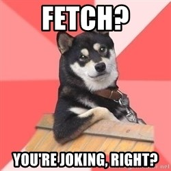 Cool Dog - fetch? you're joking, right?