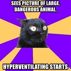 Anxiety Cat - sees picture of large, dangerous animal, hyperventilating starts