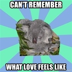 Clinically Depressed Koala - can't remember what love feels like