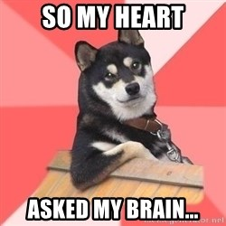 Cool Dog - so my heart asked my brain...