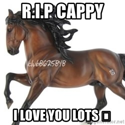 Typical horse model collector - R.I.P CAPPY  I LOVE YOU LOTS 😘